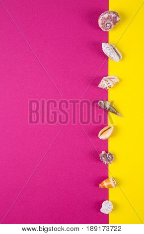Sea Shells On Colored Backgrounds With Negative Space, Top View
