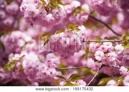 Floral Design And Gardening, Womens, Mothers Day, Spring And Summer