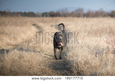 Patrolling and guarding through the tall dry grass