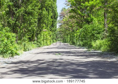 The road between the poplars goes to the distance
