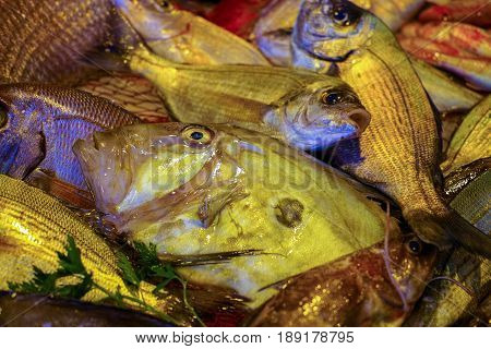 Raw fresh gilt-head bream tasty dorade fish on ice ready to cook