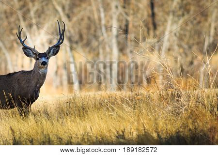 5-pointed buck deer in a forested meadow