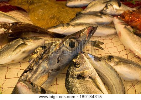 Сatch of fresh raw fish from Aegean sea Sicily Italy ready to cook on ice