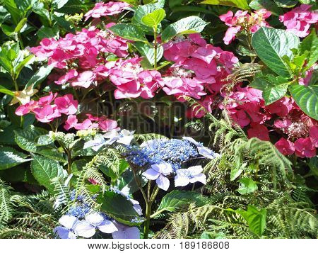 Colorful flowers and plants in a garden on a sunny day.