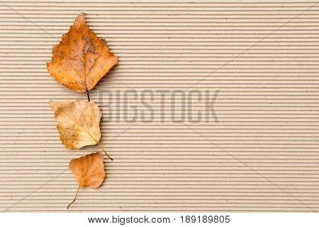 Autumn / Fall - leaves on corrugated cardboard Background