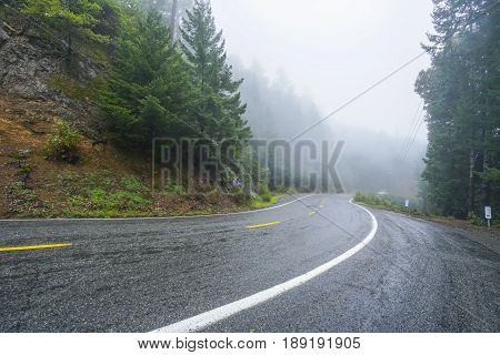 Lonesome road in the mist leading through the Redwoods National Park - REDWOOD FOREST