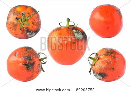 Group of rotten tomatoes on white background