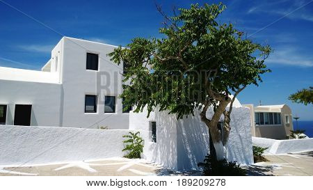 The white building on the island of Santorini in Oia village and the bright green tree beside it