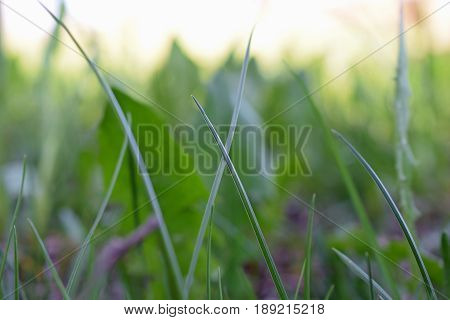 Greenery. Close up of blades of grass. Focus on foreground.