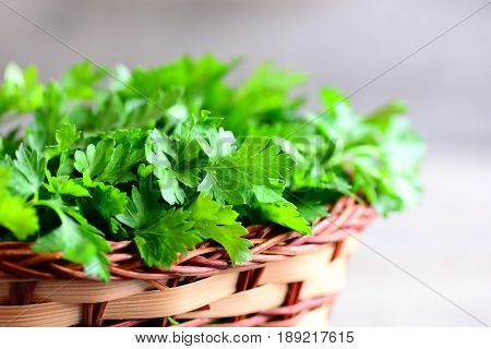 Fresh parsley sprigs in a brown wicker basket. Garden parsley herbs. Natural source of anti-oxidant nutrients, folic acid, vitamin K, vitamin C and vitamin A. Natural antioxidant food. Closeup