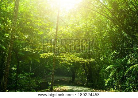 Incredible tropical rainforest landscape with sun flare in morning.