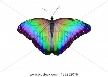 Rainbow Butterfly - open butterfly with large wing span showing graduated rainbow colours isolated on a white background
