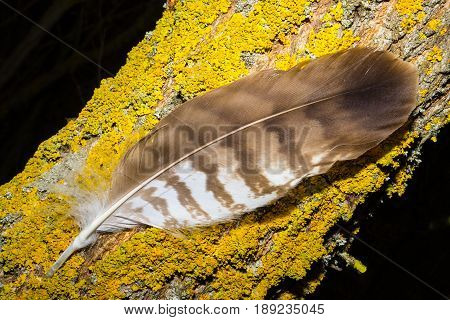 Brown feather on the tree with yellow mach