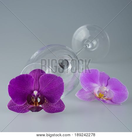Empty glass bright glass with orchid champagne glass