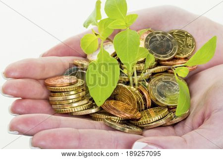 money and plant. symbol photo save