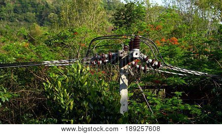 Electricity and utility pole and power lines on Doi Chang Mountain at Chiangrai province, Thailand.