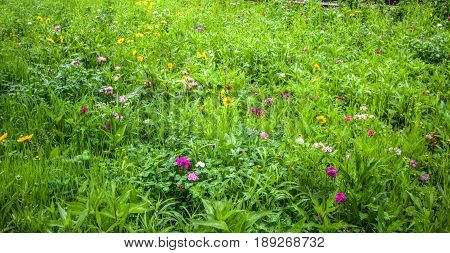 Field Of Wildflowers. Colorful wildflowers bloom in a lush green field during a warm Kentucky spring.