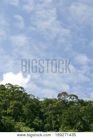 Jungle Canopy and Sky. Beautiful Transition between Canopy and Sky
