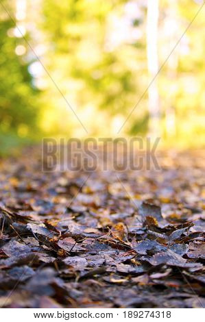 Leaves in Autumn. Nice closeup with trees in the background.