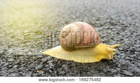The Snail On The Asphalt