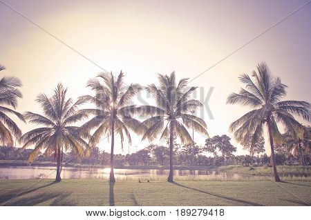 vintage coconut palm in the park , sunlight in the sky and coconut palm