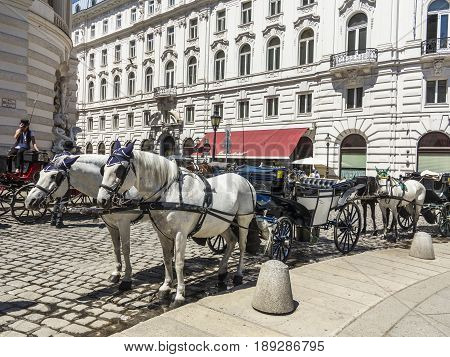 Two White Decorated Horses, Called Fiaker, Waiting For Tourists