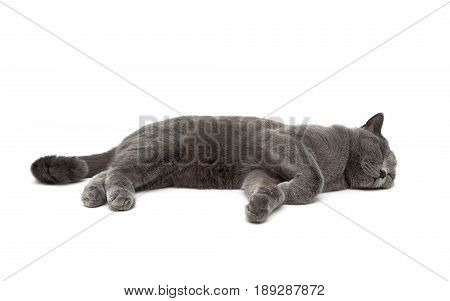 cat is sleeping on a white background. Horizontal photo.
