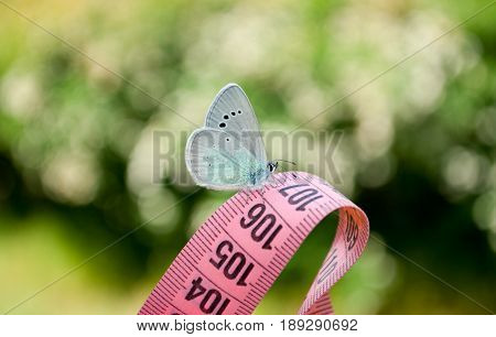 Lose weight diet side view green grass white bush white flowers measuring tape pink color figures on it sits blue butterfly close view in blurred background dream lightness flit