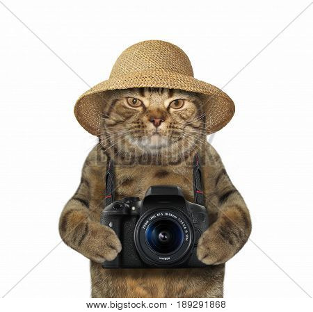 The cat photographer with a straw hat is holding a photo camera. White background.