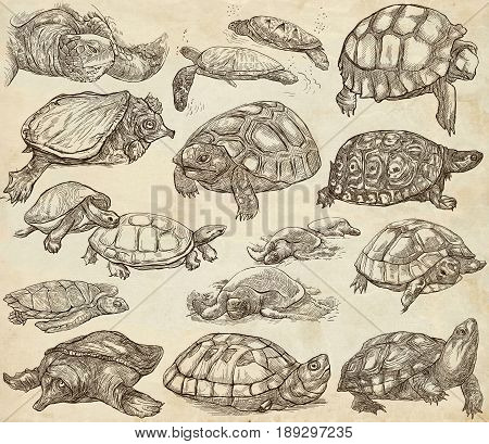Animals around the World - TURTLES and Tortoises. Collection of an hand drawn illustrations. Colored freehand sketches. Line art. Drawings on old paper background.