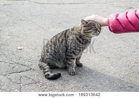 Female hand closeup petting homeless cat that sits on the asphalt street.