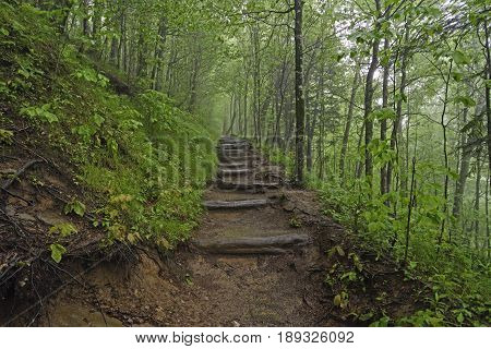 Foggy Appalachian trail in Great Smoky Mountains National Park in North Carolina