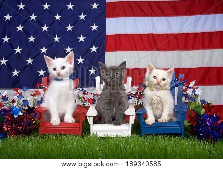 Two fluffy white kittens and one gray sitting in red white and blue chairs on green grass with american flag in the background. holiday family fun remembrance patriotism.