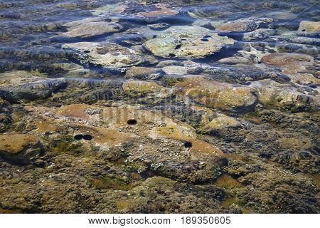 sea bottom Aegean sea, with sea urchins