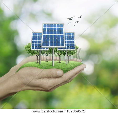 Solar cell in man hands over blur green tree with birds Ecological concept