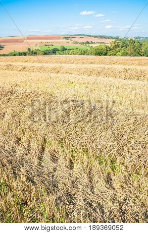 Autumnal stubble field with rows of straw and trees in the background