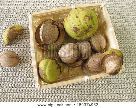 Shellbark hickory nuts in small basket,  carya laciniosa