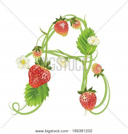 Letter A Strawberry font. Red Berry lettering alphabet. Vector realistic illustration ABC. Design for grocery, farmers market, tea, natural cosmetics, summer garden design element.