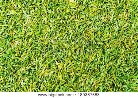 Texture of plastic grass on artificial turf