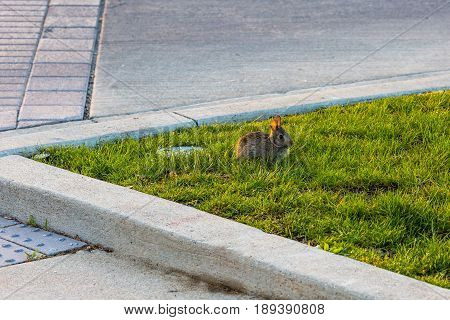 a baby rabbit in the grass next to the street