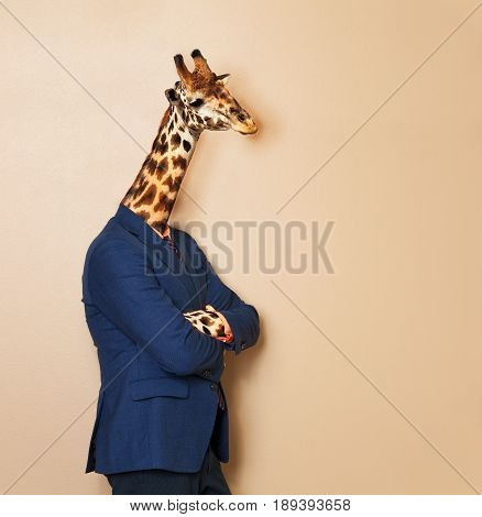 Portrait of giraffe headed businessman, wearing blue suit with his arms folded, leaning at blanked space for copy, concept of office worker