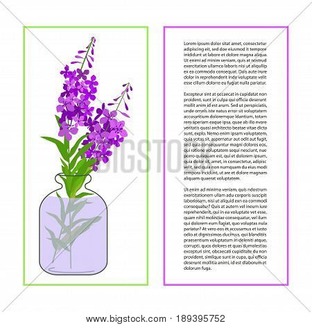 Card with Fireweed Flower or Chamaenerion isolated on a white background. Wildflower in glass jar. Place for text. Botany herbs Vector Illustration eps10