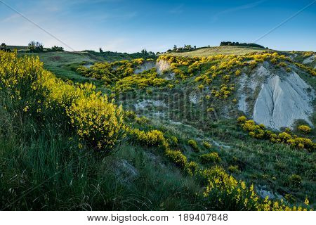 Volterra, Tuscany - May 21, 2017 - Yellow Wild Gulls Surround The Hills Of Volterra
