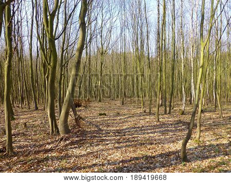Photo of a forest full of leafless trees