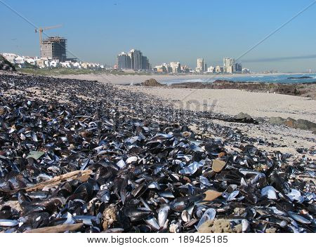 BLOUBERG STRAND, CAPE TOWN, SOUTH AFRICA, SEA SHELLS IN FORE GROUND WITH HIGH RISE BUILDINGS IN THE BACK GROUND