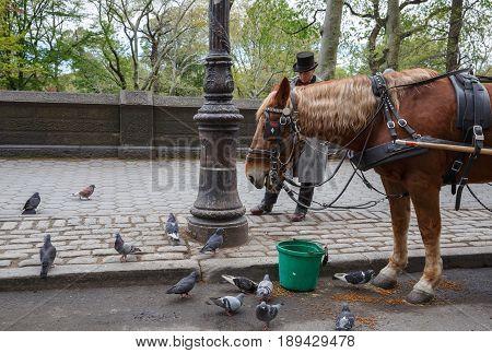 Manhattan Street Scen