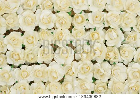 Many pale yellow roses flower floral background