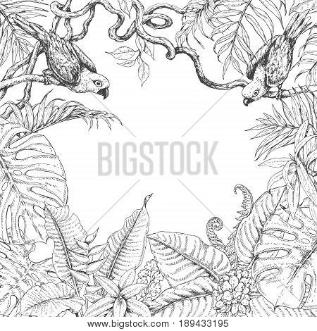 Hand drawn branches and leaves of tropical plants. Monochrome square floral frame with birds sitting on liana branches. Black and white border with space for text. Vector sketch.