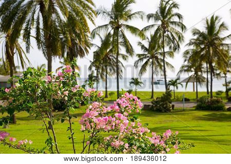 Antigua, Caribbean islands, English Harbour - May 20, 2017: Idyllic tropical palm garden in the the Freeman's bay