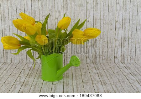 Beautiful yellow tulips in green watering can on structure background